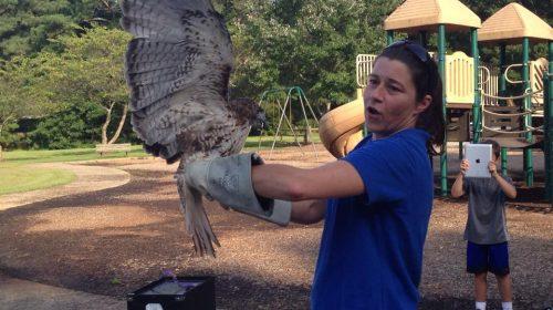 Kathryn Dudeck: Hawk Hero