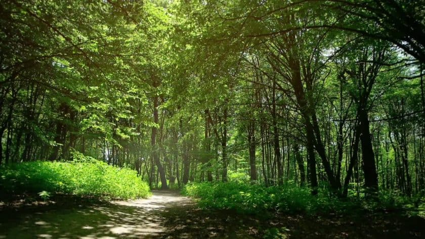 Lush Deep Forest