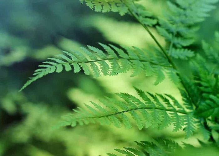 A Breathing Fern