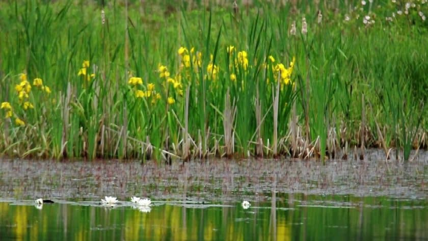 Beautiful Summer Marsh
