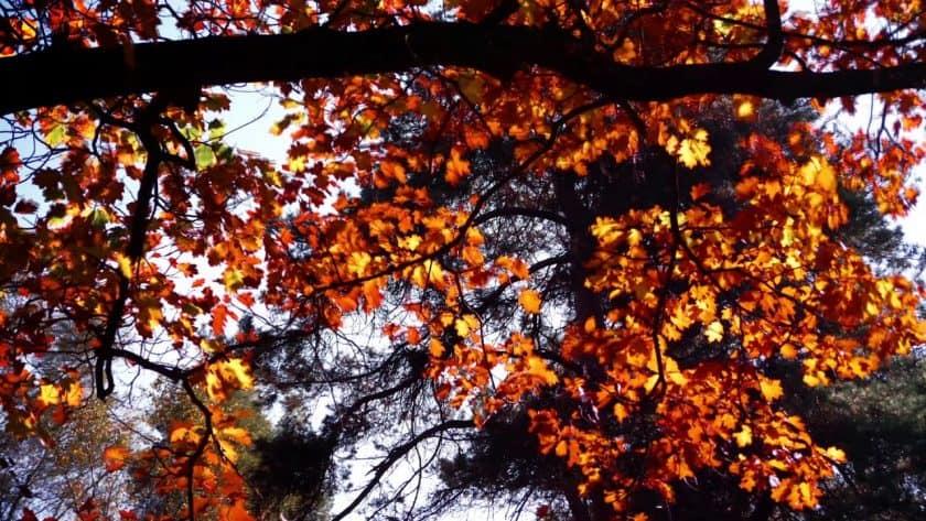 Rustling Fall Leaves