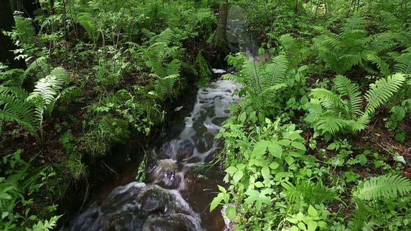 Serene Mountain Stream