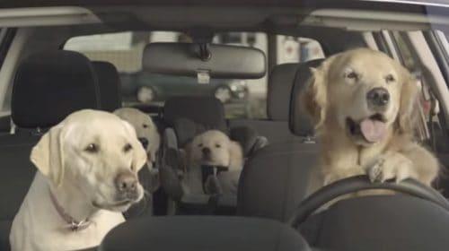 Adorable Dog Commercials by Subaru