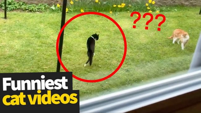 Hilarious Cat Videos – Ultimate Cat Video Compilation