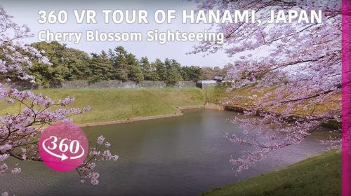 Experience Japan's 'Hanami' Cherry Blossom Festival in 360°