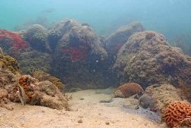 Live Underwater View of 'Coral City'