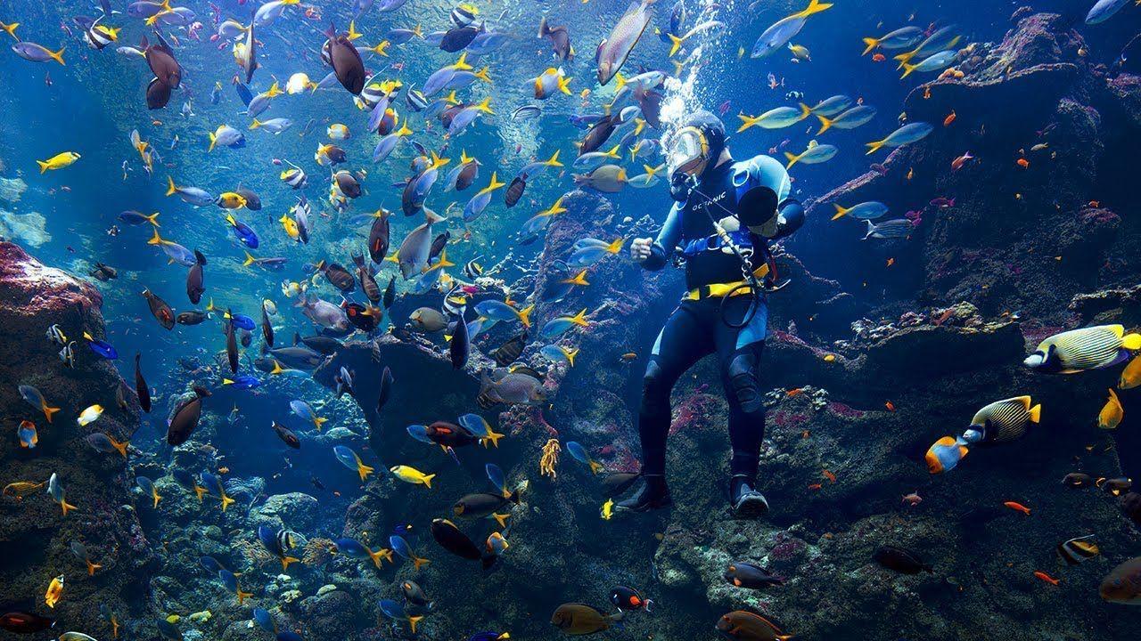 Live Coral Reef Cam - Explore.org LIVECAM