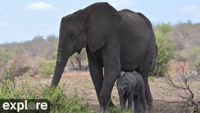 Tembe Elephant Park Cam – Explore.org LIVECAM