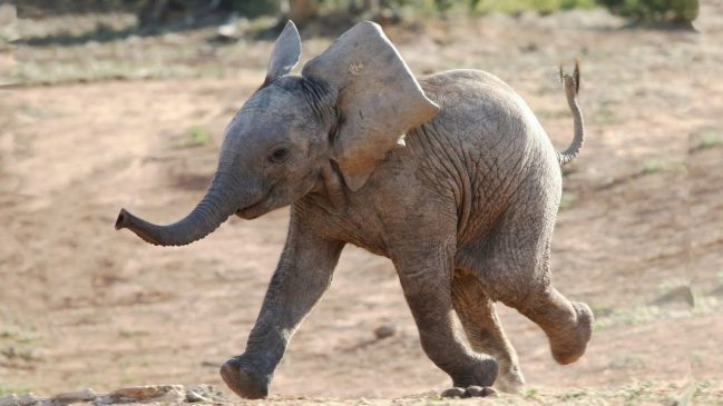 Funny and Cute Baby Elephant Videos Compilation