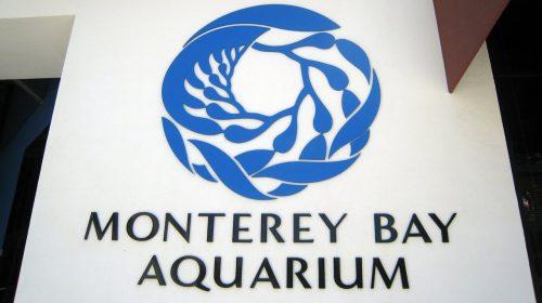 Virtual Tour of Monterey Bay Aquarium