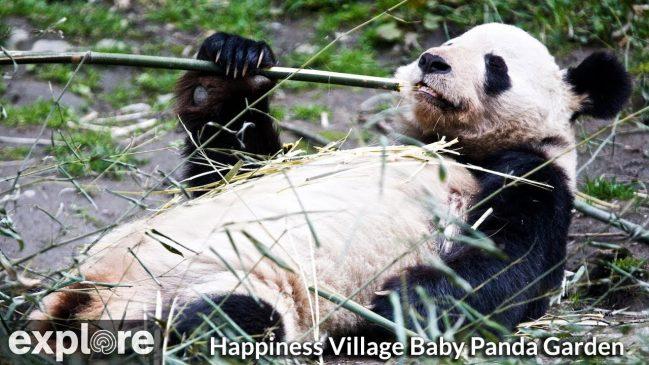 Baby Panda Garden Cam in Happiness Village – Explore.org LIVECAM