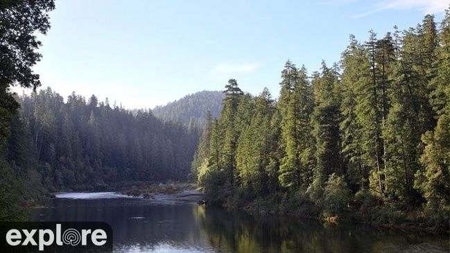 Redwood Forest River Crescent City, California