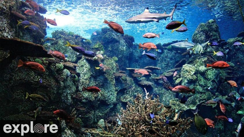 Tropical Reef Cam – Explore.org LIVECAM