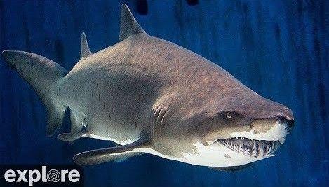 Shark Lagoon Cam – Explore.org LIVECAM