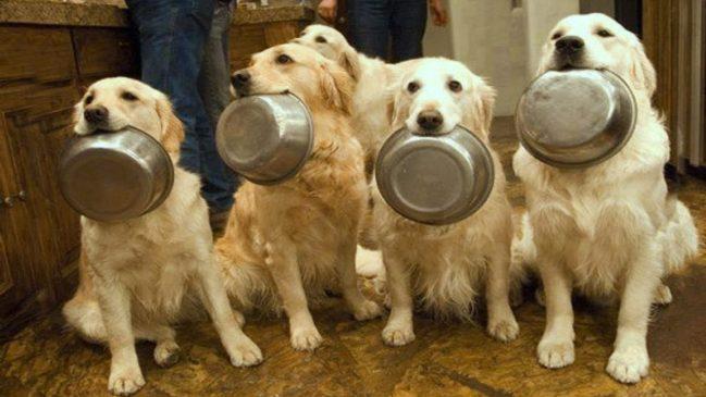 Amazingly Smart Dogs