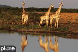 Tau Waterhole Madikwe Game Reserve, South Africa