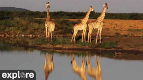Tau Waterhole in Madikwe Game Reserve, Africa – Explore.org LIVECAM