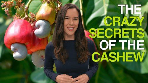 Crazy Secrets of the Cashew