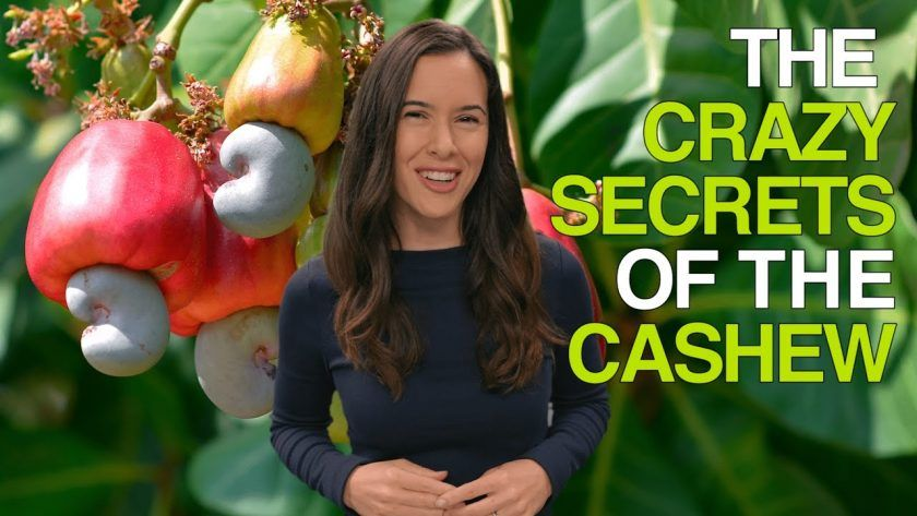 Crazy Secrets of the Cashew
