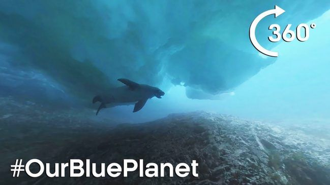 Go Diving Under Icebergs with a Seal in Antarctica