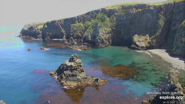 Channel Islands' Anacapa Peregrine Falcon Cam – Explore.org LIVECAM