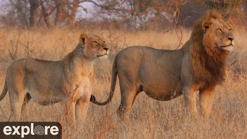 Nkorho Bush Lodge in Sabi Sand Game Reserve – Explore.org LIVECAM