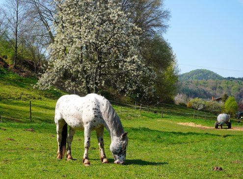 Horse Pasture at Kentucky Equine Adoption Center – Explore.org LIVECAM