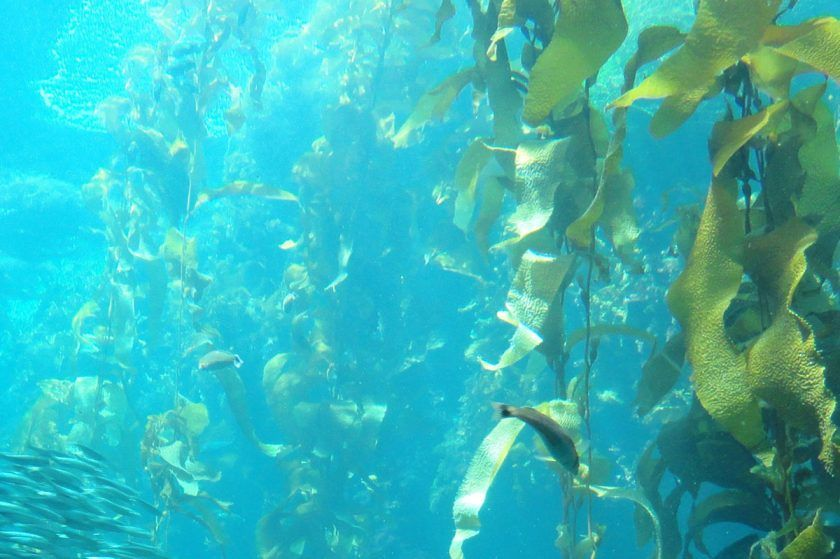 Explore an Underwater Kelp Forest: A Guided 360° Diving Exploration