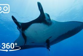 Take a Dive with Giant Manta Rays in Mexico