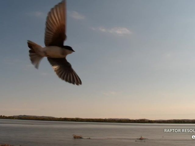 Mississippi River Flyway Cam – Explore.org LIVECAM