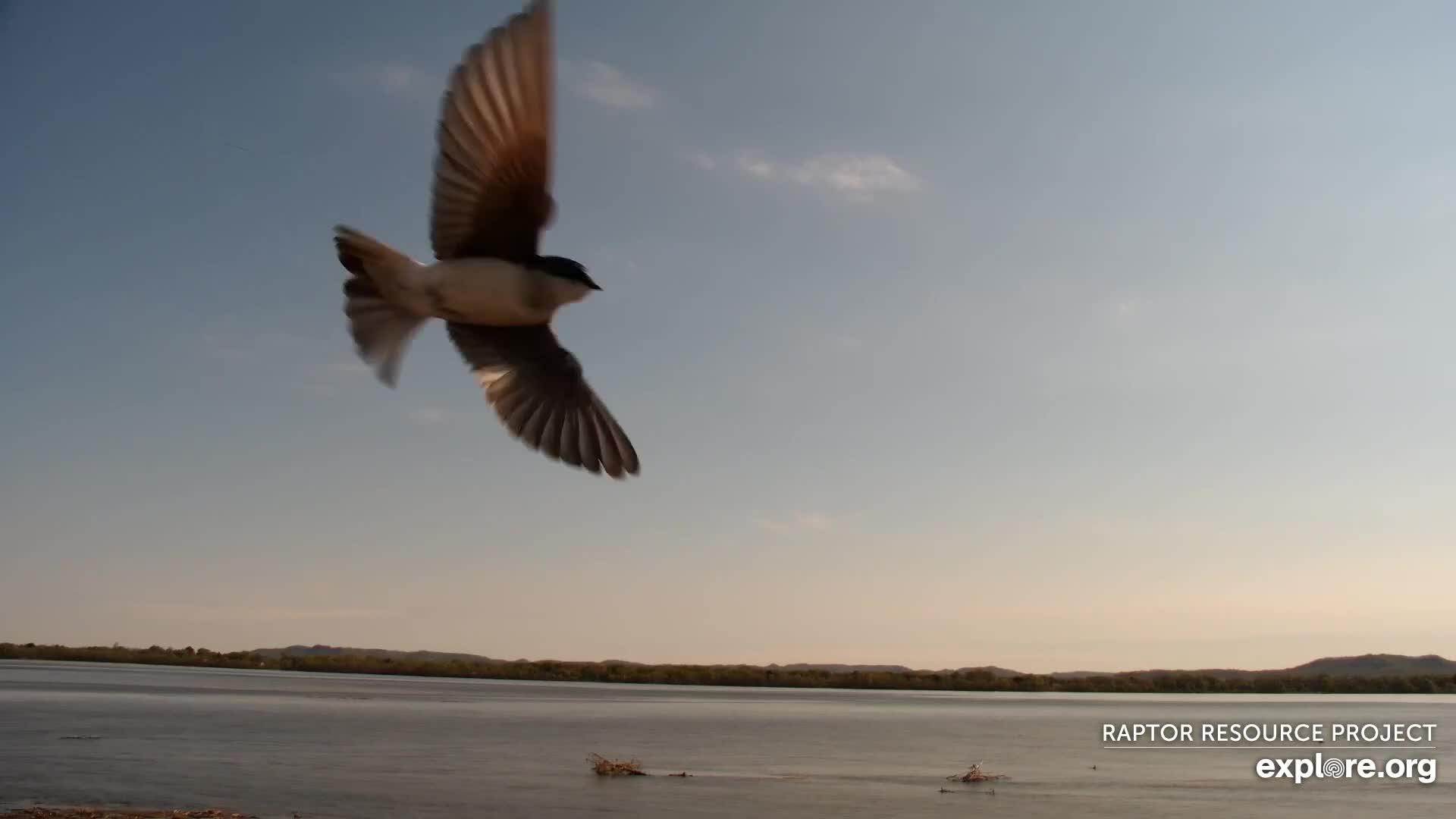 Mississippi River Flyway Cam - Explore.org LIVECAM