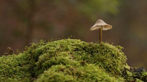 Visit the Fascinating World's Largest Mushroom Farm