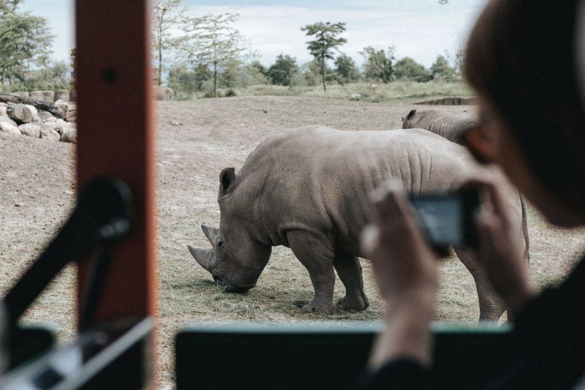 Take an African Safari in Kruger National Park – A 360° Experience