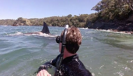 Swimming with Orcas in New Zealand