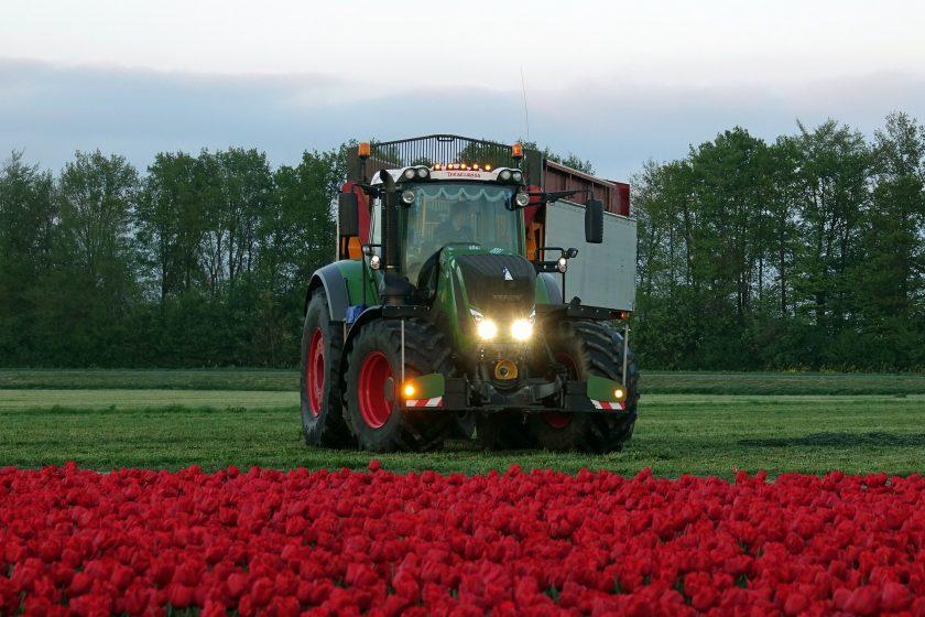 Experience Tulip Farming