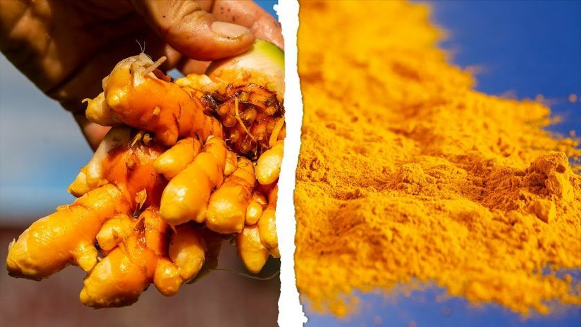 How Does Turmeric Grow?