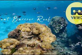 Enjoy a 360° Virtual Dive in Australia's Great Barrier Reef