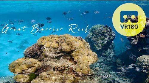 Enjoy a Virtual Dive in Australia's Great Barrier Reef