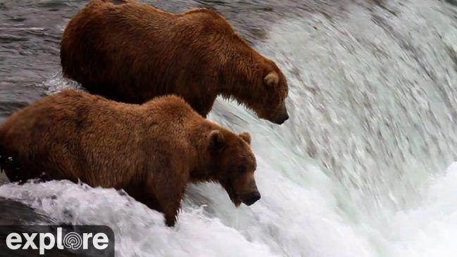 Alaskan Bear Cam in Brooks Falls – Explore.org LIVECAM
