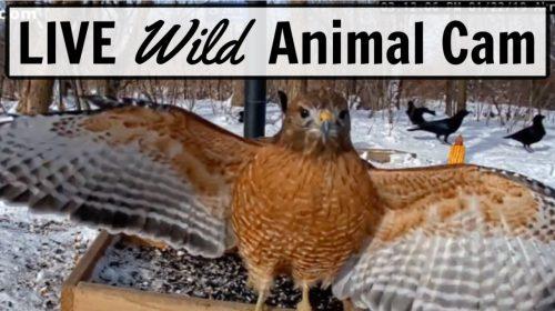 Scott's Backyard Animal FeederCam