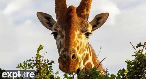 African River Wildlife – Explore.org LIVECAM