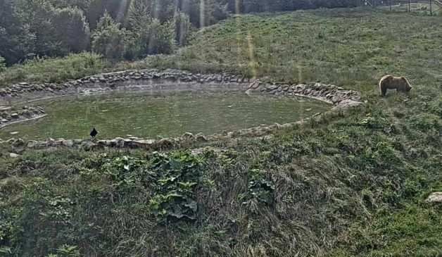 Mountain View of LIBEARTY Bear Sanctuary in Romania