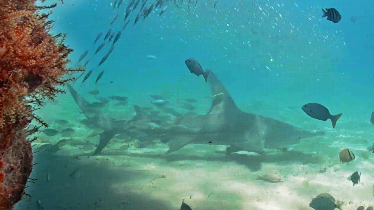 Live Underwater Cam in Deerfield Beach, Florida