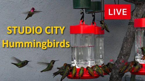 The Hummingbird Spot