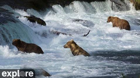 Riffles Bear Cam – Explore.org LIVECAM