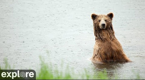 Bear River Watch at Katmai National Park in Alaska – Explore.org LIVECAM