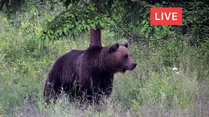 LIBEARTY Bear Sanctuary in Romania