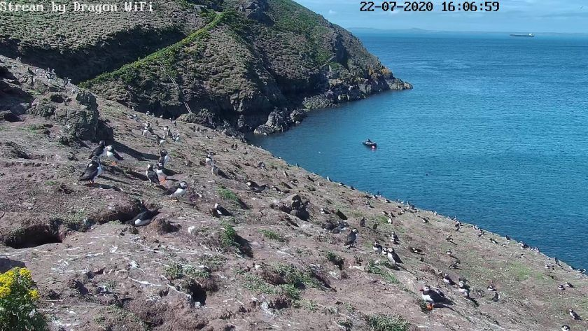 Skomer Wildlife Camera