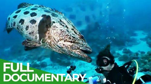 The Underwater Wonderland of Australia