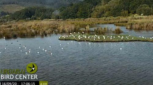 Urdaibai Bird Centre, Spain